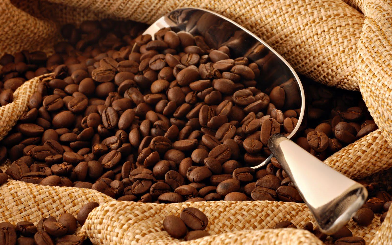 Café-taza de excelencia