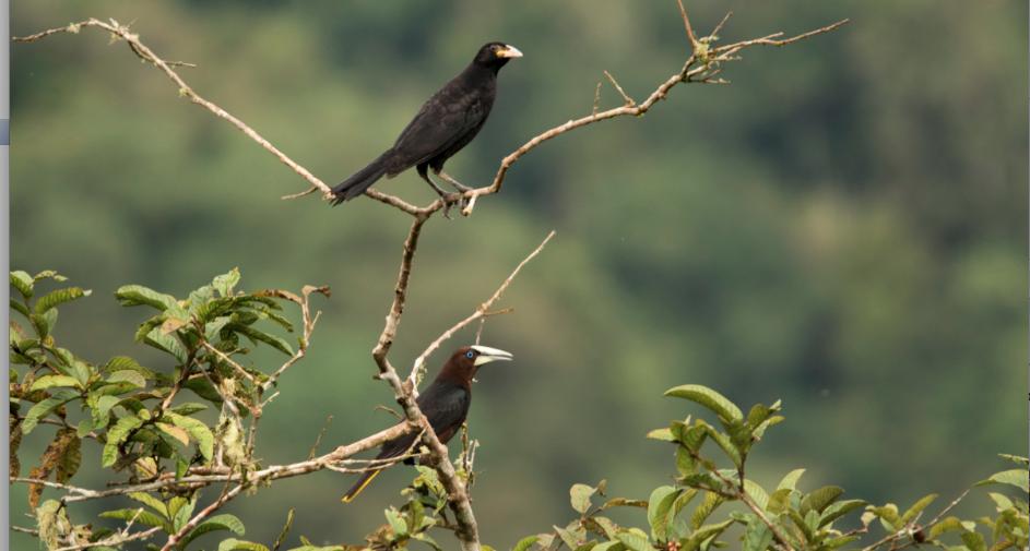 aves-pajareando